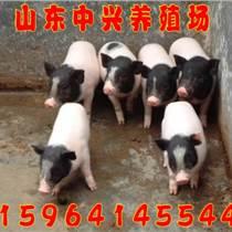 湖北襄陽哪里有香豬養殖基地
