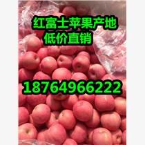 供應山東紅富士蘋果今日價格