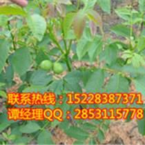 四川李子樹苗,四川脆紅李子苗價格,四川脆紅李子苗產量