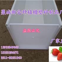 草莓種植槽 草莓無土栽培槽 草莓立體種植成本