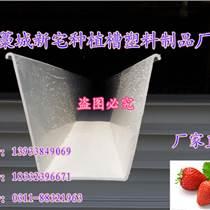 草莓立體栽培槽 草莓基質栽培 草莓滴灌種植技術