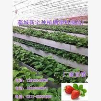 蔬菜无土栽培槽  滴灌种植技术
