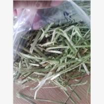 佳信誠常年供應進口苜蓿草,適用牛羊,廠家價格