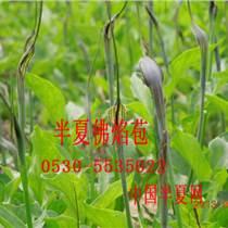 半夏種莖對環境條件的要求