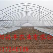 漯河蔬菜大棚 gp-825鋼架大棚 連棟大棚建造