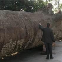 国内哪里现金收购3000年乌木金丝楠木