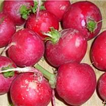 櫻桃蘿卜種子價格