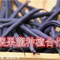 紫蕓豆種子價格