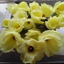 金花葵種子價格