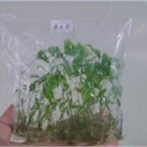 广西益农富植物科技有限公司,牛大力种子,牛大力种苗,白芨种子,白芨种苗