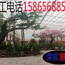 六安生态园假树