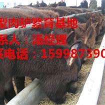 山东大型种驴毛驴母驴养殖基地