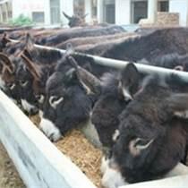 青島肉驢養殖周期育肥驢的價格肉驢出欄價格