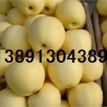 陜西水果基地-陜西冷庫箱裝酥梨產地批發價格