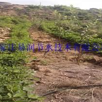 盐田区果树滴灌节水设备|水肥一体化厂家