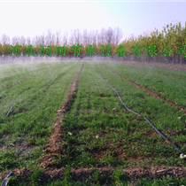 阳泉市玉米灌溉喷雾带型号|微喷带节水设备