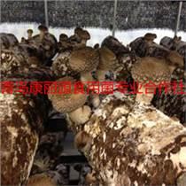 山東青島出口食用菌菌棒香菇菌棒