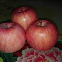水晶紅富士蘋果價格,陜西紅富士蘋果,紅富士蘋果產地價格。