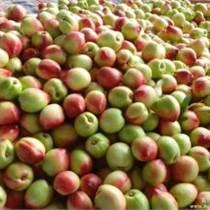 山東油桃產地價格油桃市場批發