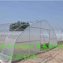 供應蔬菜大棚新型建設工程