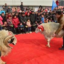 2017中国·山东济宁斗羊节即将开幕
