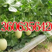 蔬菜水果批發 瓜果蔬菜批發市場