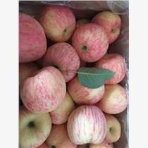山東蘋果價格紅富士蘋果價格