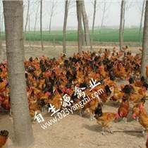 銅仁廠家:自生源禽業