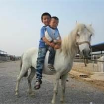 平凉哪里有卖小矮马的