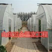 濰坊其他薄膜溫室銷售安全可靠