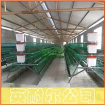 立式肉雞籠|1.4米三層兩門肉雞籠|英耐爾各種肉雞籠