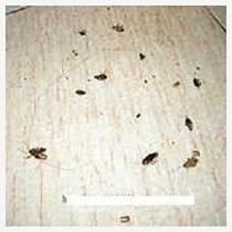 烟台灭蟑螂灭老鼠灭蚂蚁都找烟台安洁尔杀虫灭鼠有限公司