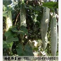 变色瓜种子 金芒果瓜 彩瓜图片 老鼠瓜种植 特色瓜果