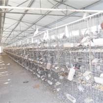 鴕鳥出售價格面議山東鴕鳥場河北鴕鳥價格
