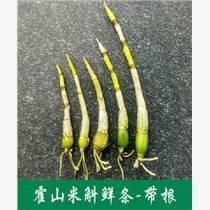 野生種植鮮石斛花加工