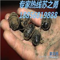 蘇州土元養殖養殖技術