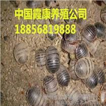 蘇州土元養殖管理技術