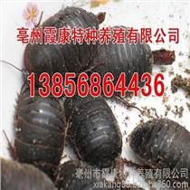 蘇州土元養殖濕度調節