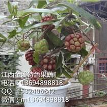 布福娜種子、長壽鮮果種子、黑老虎