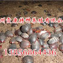 临泉土元养殖技术