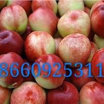 大量供应西瓜油桃苹果