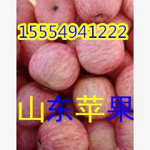 山东红富士苹果批发价