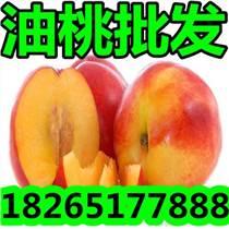 【油桃】现在山东油桃多钱一斤