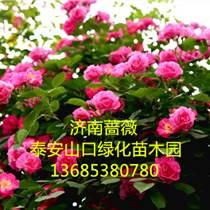 薔薇花綠籬