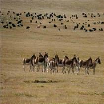 供西寧旅游景點和青海最佳旅游線路