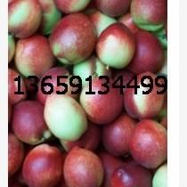 陜西油桃基地油桃價格大荔縣518油桃大量上市