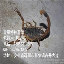 如東土元養殖蝎子養殖