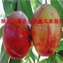 陜西油桃價格油桃批發價格2016年中油5油桃價格