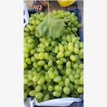 代銷、批發中熟油桃
