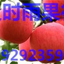 红富士苹果价格陕西冷库红富士苹果价格厂家直销